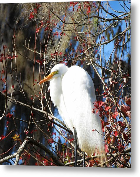 White Egret Bird Metal Print