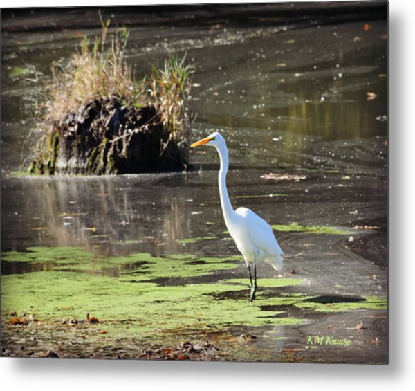 White Egret In The Shallows Metal Print