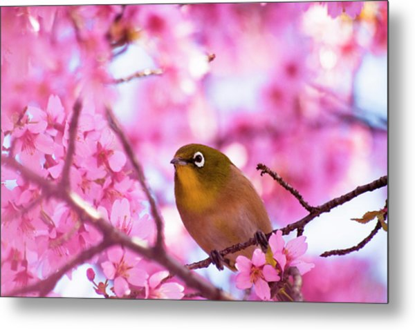 White Eye Bird Metal Print by masahiro Makino