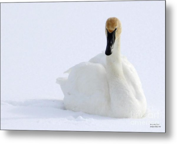 White Feathers On Snow Metal Print