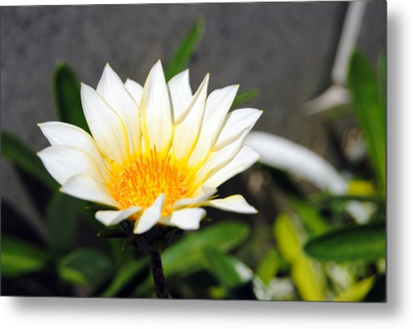 White Flower 3 Metal Print