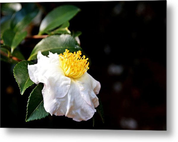 White Flower-so Silky And White Metal Print