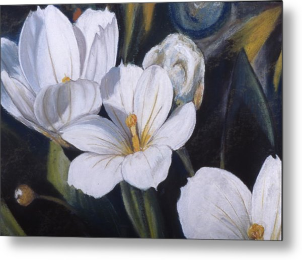 White Flower Study Metal Print by Victoria Heryet