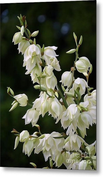 White Flowers Photography Metal Print