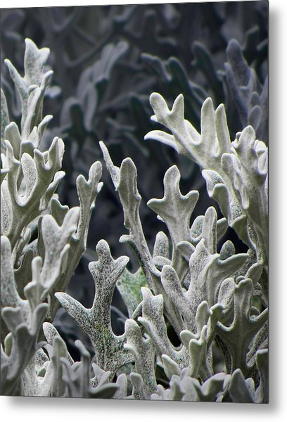 White Forest 2 Metal Print by Michael Taggart II