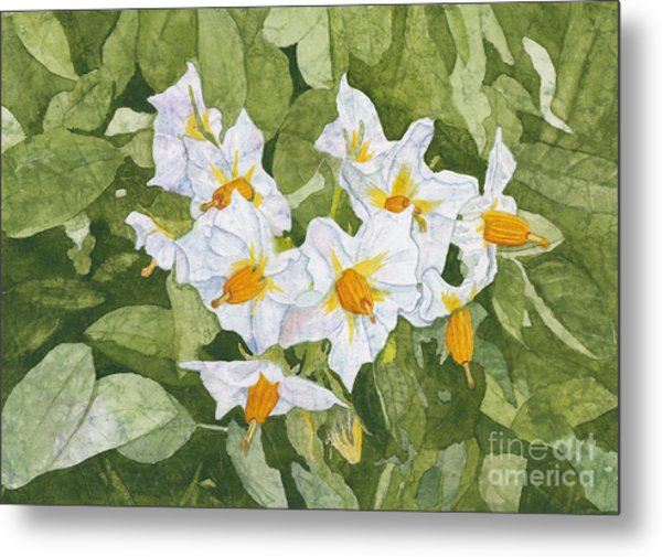 White Garden Blossoms Watercolor On Masa Paper Metal Print