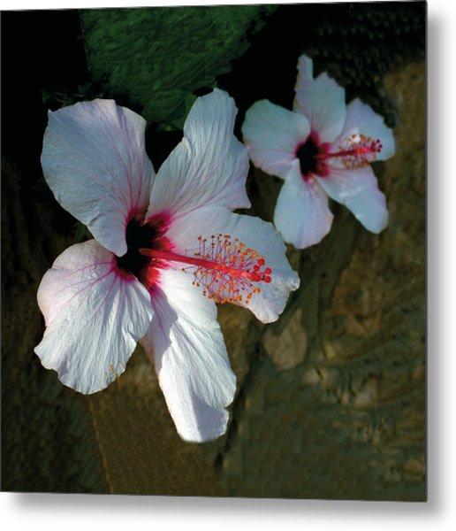 White Hibiscus Pair Metal Print