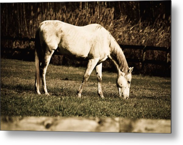 White Horse Metal Print by Martin Rochefort
