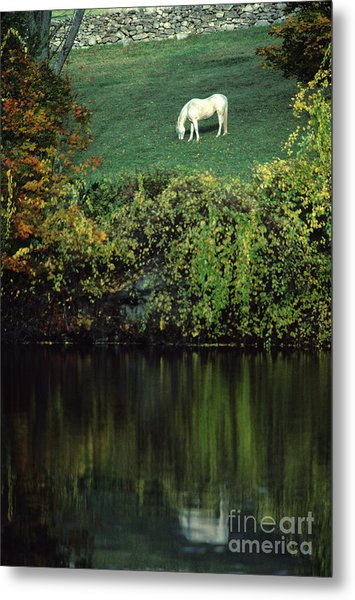 White Horse Reflected In Autumn Pond Metal Print