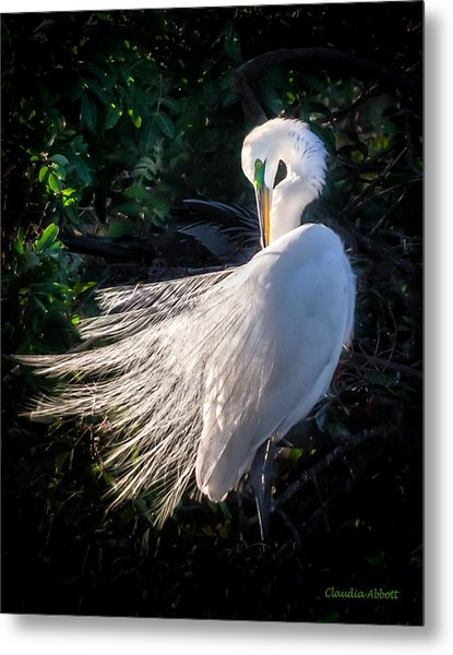 Egret In Wedding Feathers Metal Print