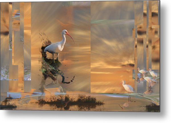 White Ibis In Abstract Metal Print