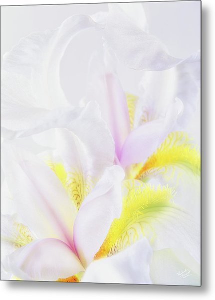 White Iris Metal Print by Leland D Howard