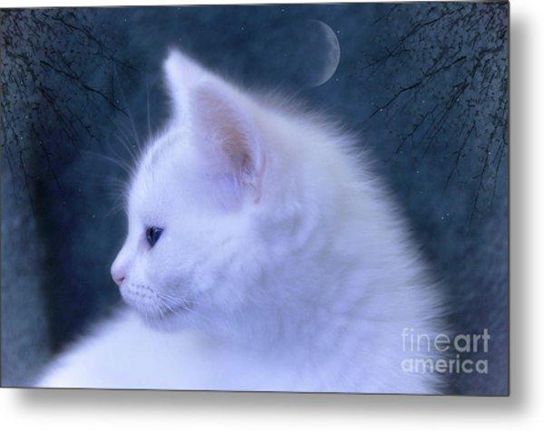 White Kitten At Night Metal Print