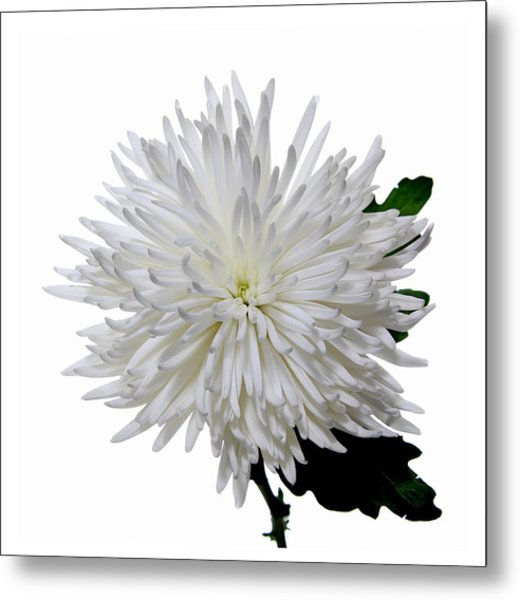 White On White Metal Print by Peter Dorrell