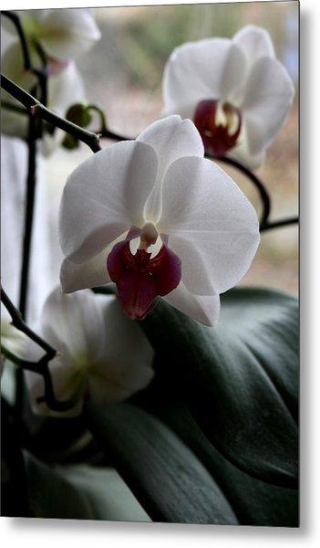White Orchid Portrait Metal Print