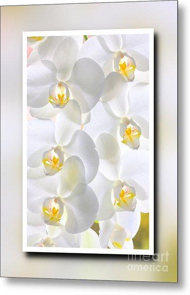 White Orchids Framed Metal Print