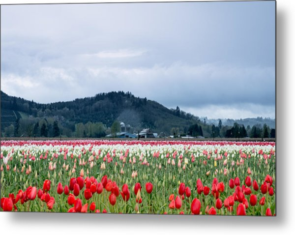 White Pass Highway With Tulips Metal Print