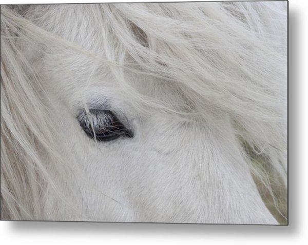 White Pony Metal Print
