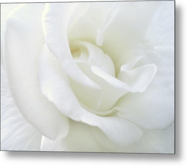 White Rose Angel Wings Metal Print