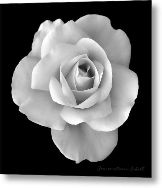 White Rose Flower In Black And White Metal Print