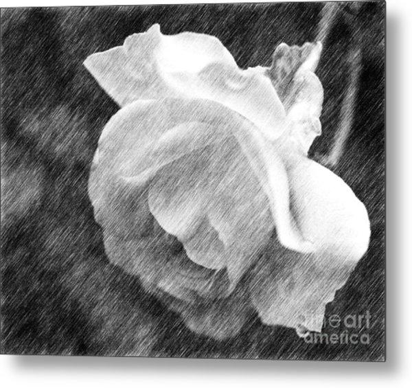 White Rose In Pencil Metal Print