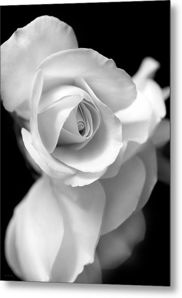 White Rose Petals Black And White Metal Print