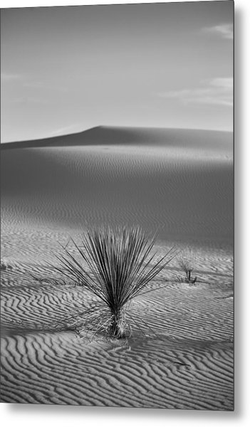 White Sands Yucca Metal Print