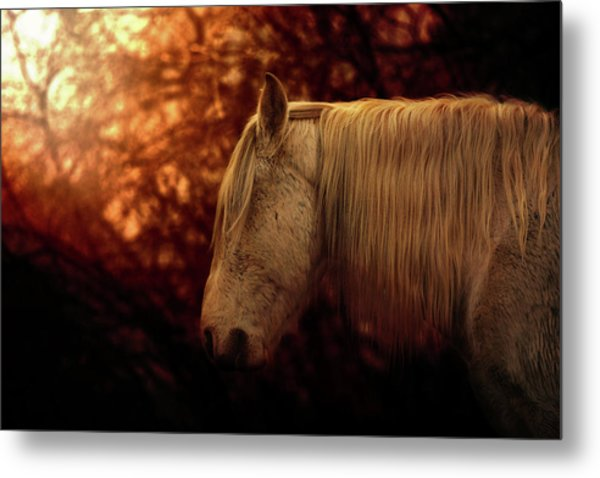 White Stallion Metal Print