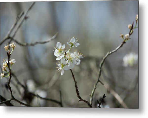 White Tree Bud Metal Print