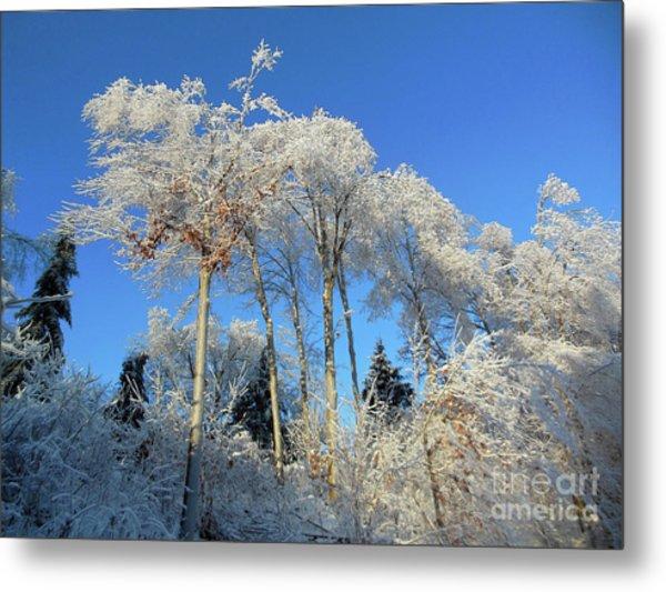 White Trees Clear Skies Metal Print