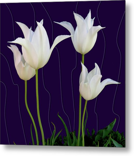 White Tulips For A New Age Metal Print