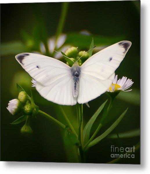 White Wings Of Wonder Metal Print