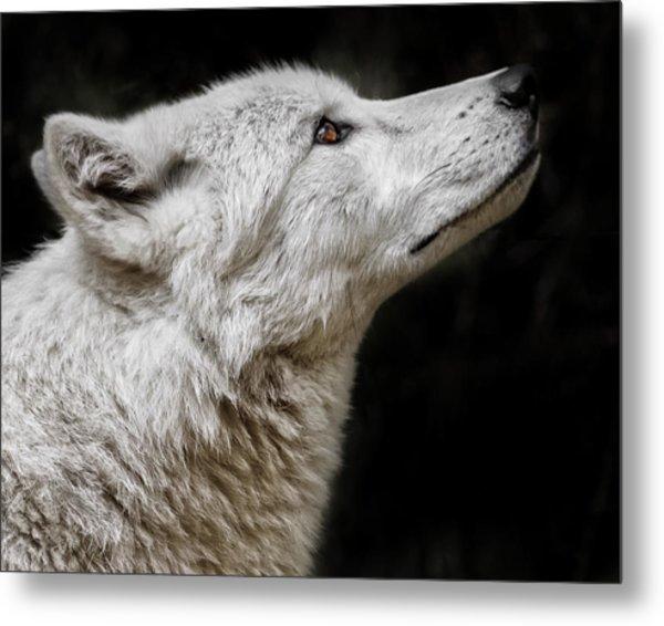 White Wolf Metal Print