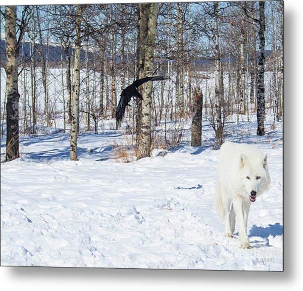 White Wolfdog Metal Print