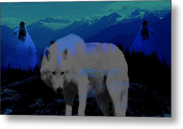 White Wolves Metal Print by Evelyn Patrick