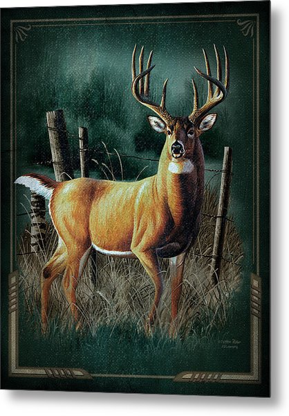Whitetail Deer Metal Print