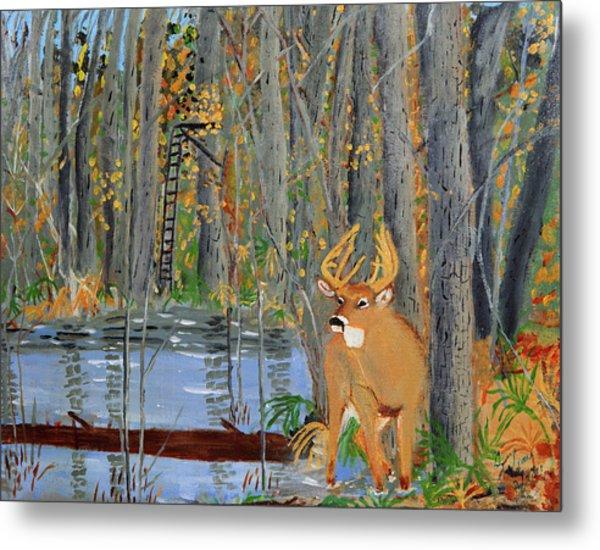 Whitetail Deer In Swamp Metal Print