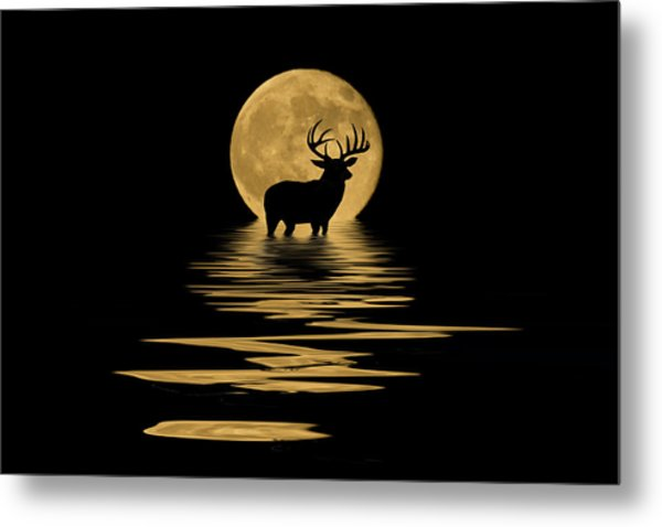 Whitetail Deer In The Moonlight Metal Print