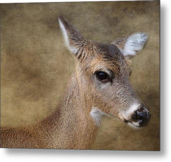 Whitetail Doe Portrait Metal Print