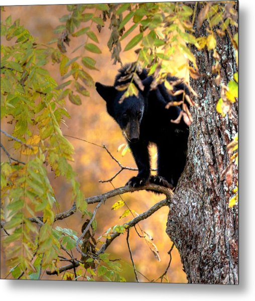 Who Are You Looking At Metal Print