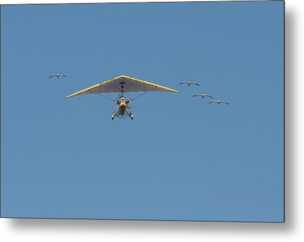 Whooping Cranes And Operation Migration Ultralight Metal Print