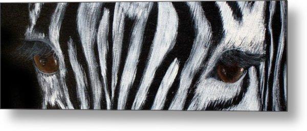 Whos Watching Who   Zebra Metal Print by Darlene Green