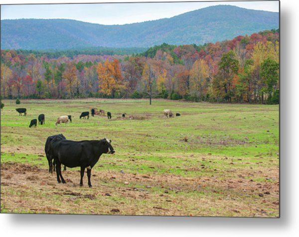 Wide Open Spaces - Autumn Landscape Metal Print by Gregory Ballos