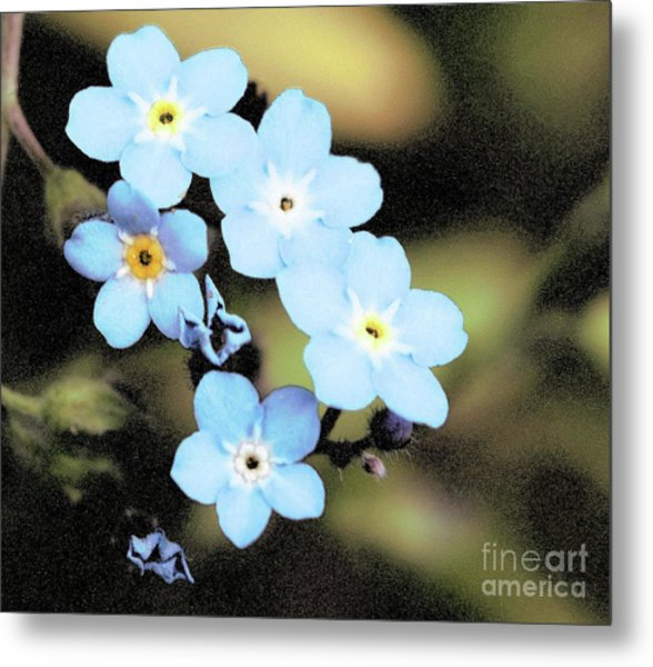 Wild And Beautiful 6 Metal Print