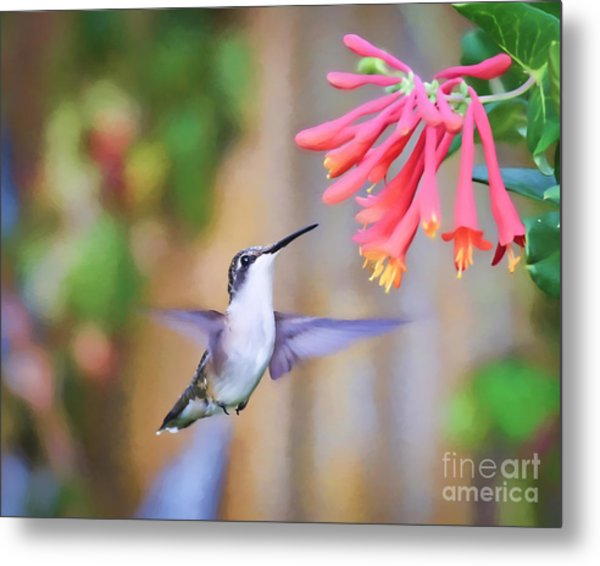 Wild Birds - Hummingbird Art Metal Print