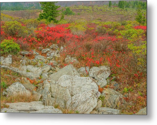Metal Print featuring the photograph Wild Blueberries by David Waldrop