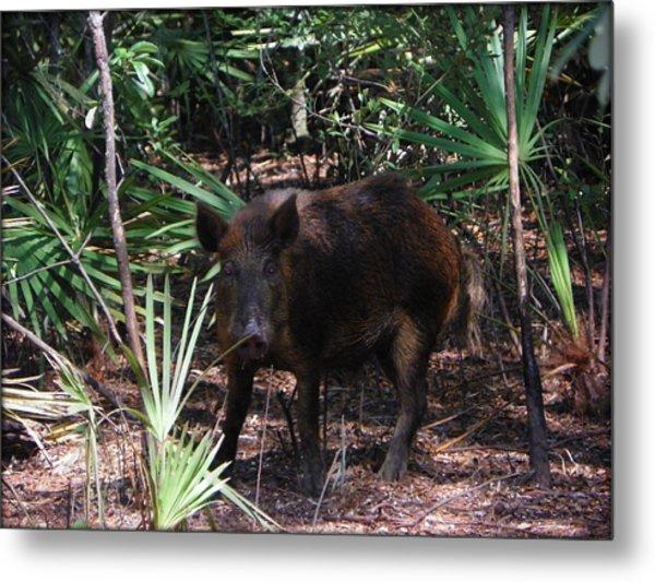 Wild Boar I Metal Print
