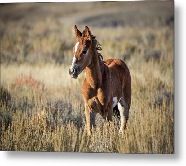 Wild Colt In Sand Wash Basin - Northwest Colorado Metal Print
