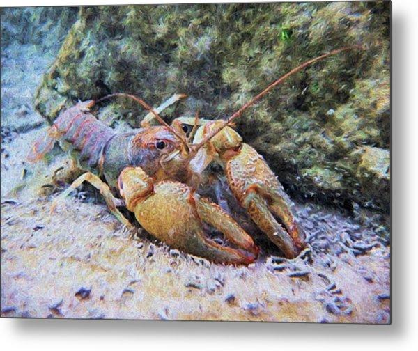Wild Crawfish  Metal Print by JC Findley