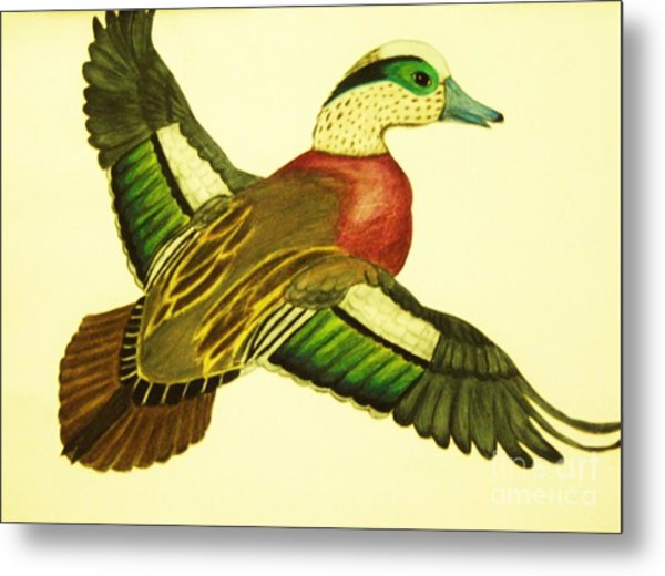 Wild Duck Metal Print by Jamey Balester